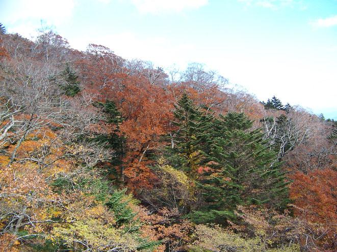 紅葉が素晴らしかったね。Kodak Z712 IS