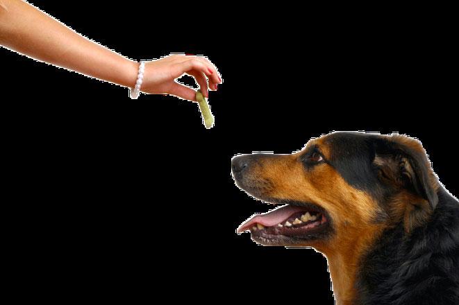 orden de sentado adiestrador canino