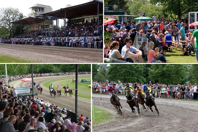 Bild: Pferde-Rennen in Karlsruhe