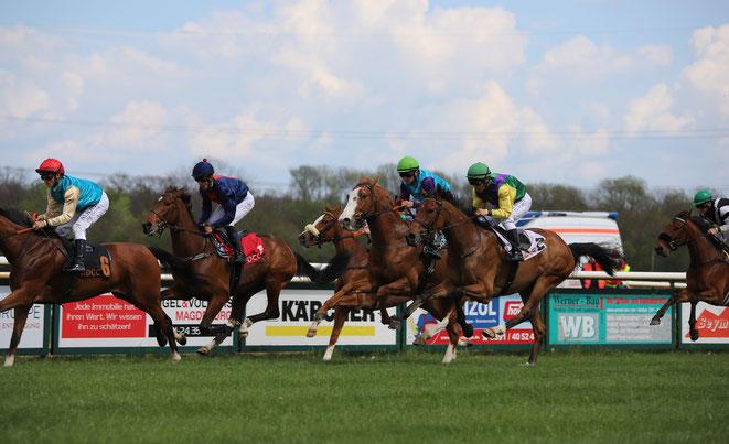 Bild: Pferde-Rennen in Magdeburg