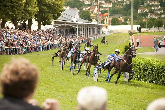 Bild: Pferde-Renne in Erbach