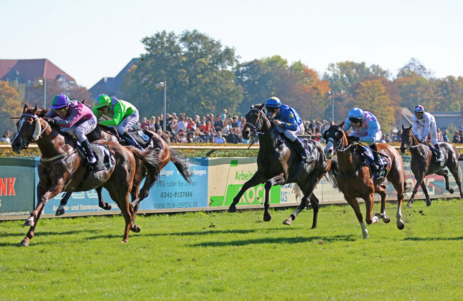 Renn-Pferde beim Pferde-Rennen