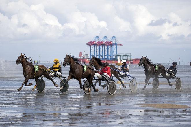 Pferde-Rennen in Cuxhaven