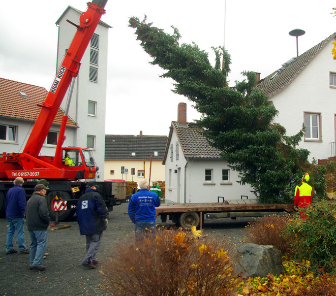 Hahner Bürgerschaft sorgt für Weihnachtsbaum am Dorfzentrum
