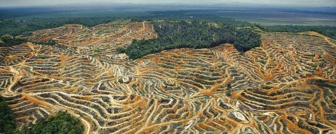 Regenwald, abholzung, wald, killing trees, deforestation, mona explores, reisen mit sinn