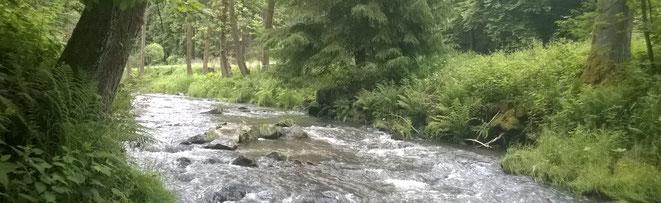 Bilder-Fliegenfischer-Sachsen