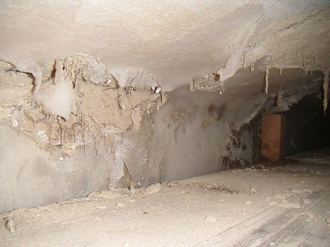 Hausschwamm Feuchtigkeit Dach
