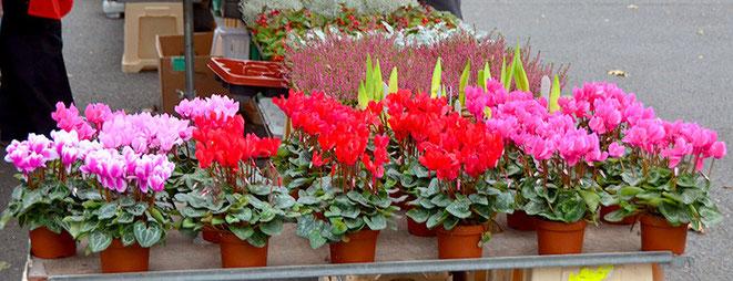 Auch an grauen Tagen sind sie eine Augenweide: die Blumen- und Pflanzen-Stände.