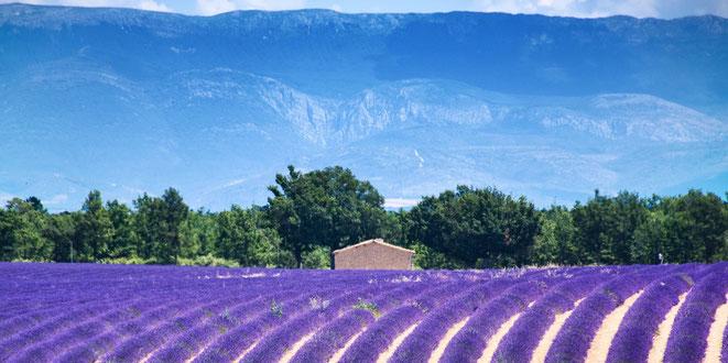 Provence Südfrankreich Lavendel Frankreich