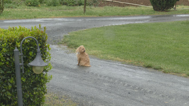 Unser Wachhund Cheevi sieht alles