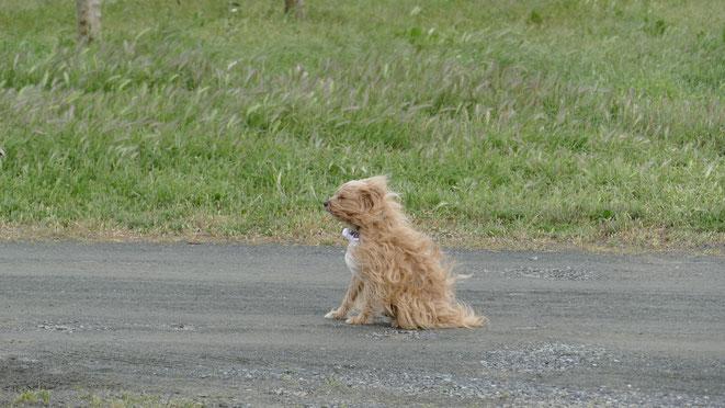 Unser Wachhund Chhevi trotzt jedem Wind, Hauptsache er ist im Freien
