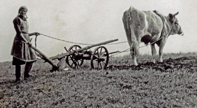 1965 (ca) Maria Moritz mit Holzpflug und Ochsen auf dem Feld