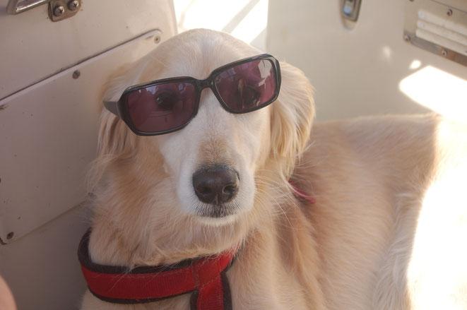 Der Bordhund, alles andere wäre cool