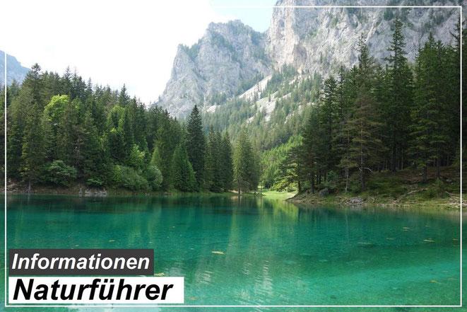 Bester Naturführer Empfehlung, guter Naturführer für Kinder, Naturführer Buch