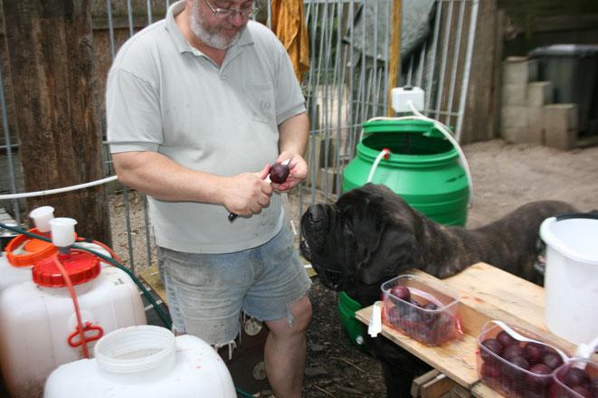 Gustav macht die Qualitätskontrolle beim Metsieden
