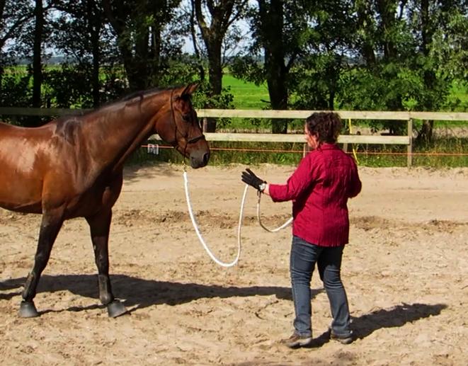 Grondwerk met een paard in Heiloo.