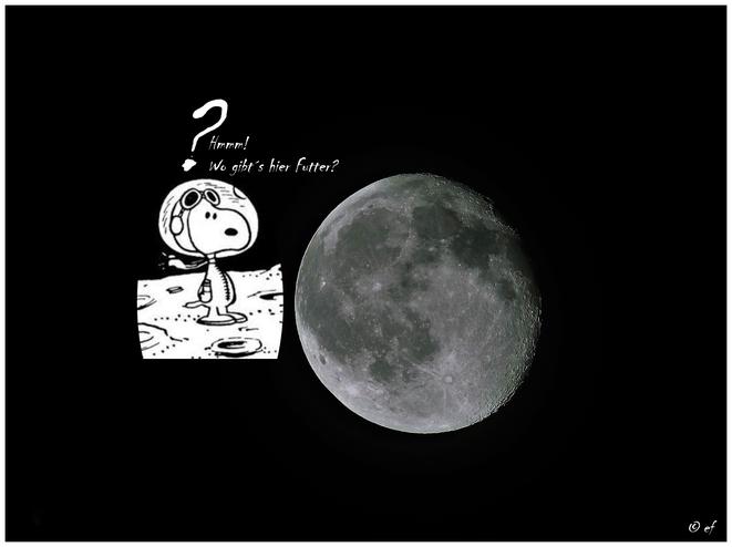 Foto & Text : HP-Herausgeberin; Zeichnung: © Peanuts - von der HP-Herausgeberin zu einer Fotocollage zusammengestellt