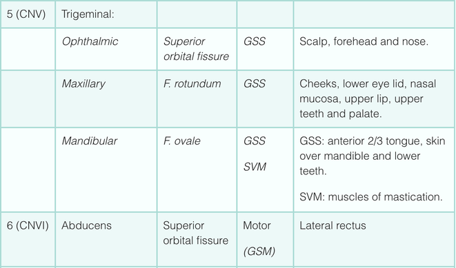 Cranial nerve function V and VI