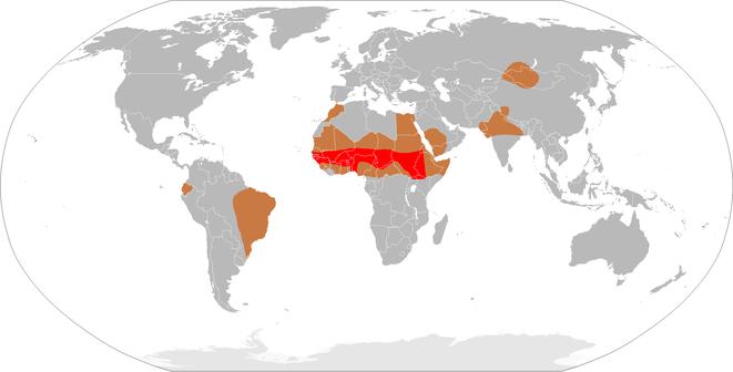 demography of bacterial meningitis worldwide