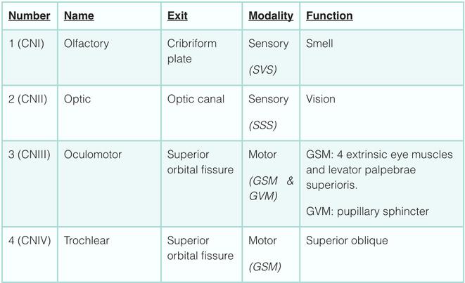 Cranial nerves sensory motor Electric motor repair columbia sc