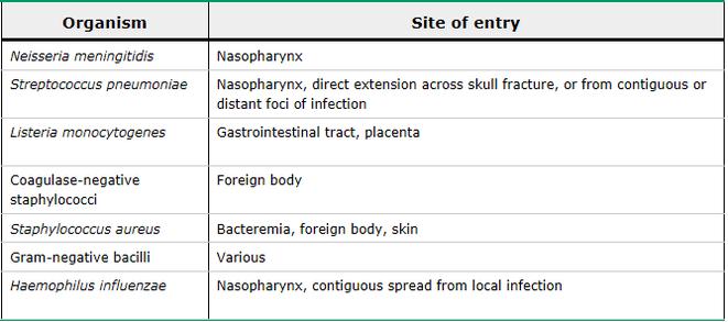 neisseria meningitidis, streptococcus pneumoniae, listeria monocytogenes, coagulase negative staphylococci, staph aureus, haemophilus influenzae