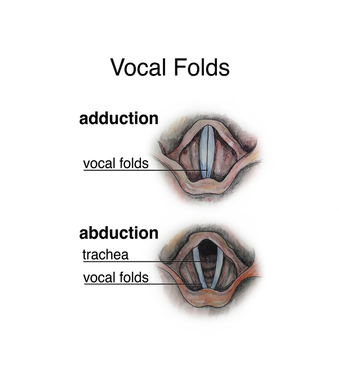 Appendix A. Vocal Folds