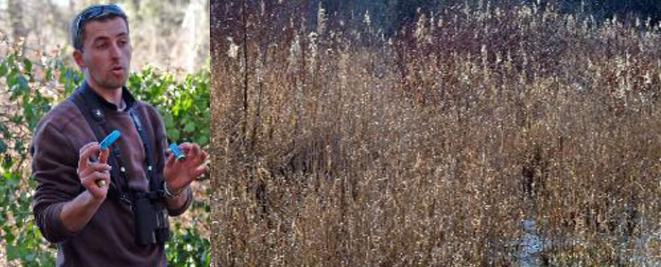 au bord de la Loane, des roselières. Olivier : le tir au plomb est strictement interdit en zone humide