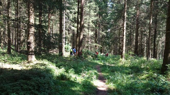 Wandern | Wald | Waldbaden | Natur | Fasten | Buchinger