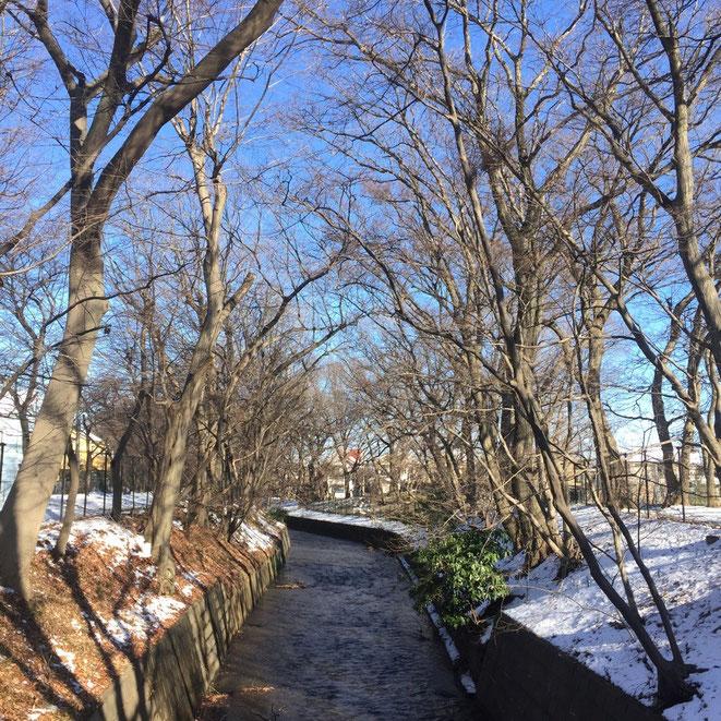 Tamagawajosui Aqueduct with snow Tokyo Tachikawa 雪の玉川上水 東京都立川市 nature winter