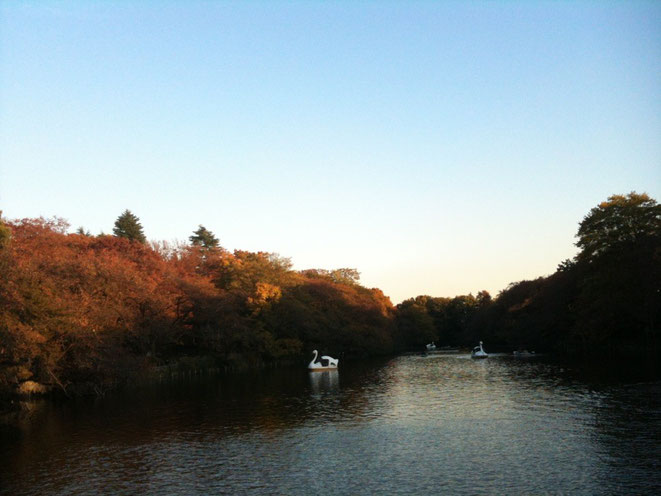 Inokashira Park in Red Leaves season Tokyo Mitaka Musashino nature autumn tourist spot TAMA Tourism Promotion - Visit Tama 井の頭公園 紅葉 東京都三鷹市 武蔵野市 自然 秋 観光スポット 多摩観光振興会