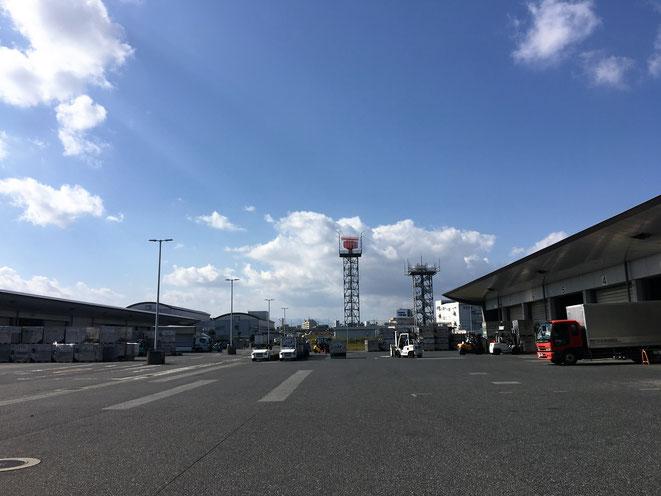 福岡県手乗りインコ小鳥販売店ペットミッキン 2016年11月12日の福岡空港の写真