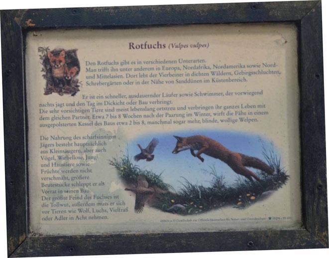 Erläuterungstafel für den Rotfuchs