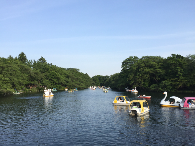 Inokashira pond at Inokashira Park in Early Summer in Tokyo Mitaka city 初夏の井の頭公園 東京都三鷹市