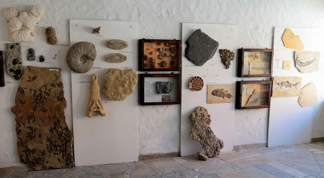 Fossilienausstellung Bestand Museum Fossil