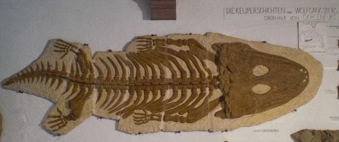 Mastodonsaurus, Keuper