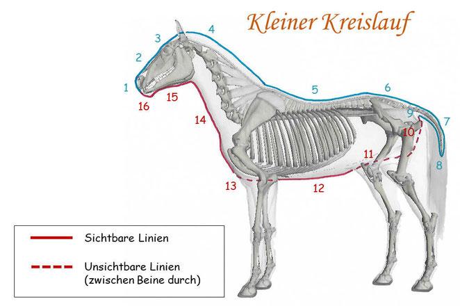 Kleiner Kreislauf Pferd