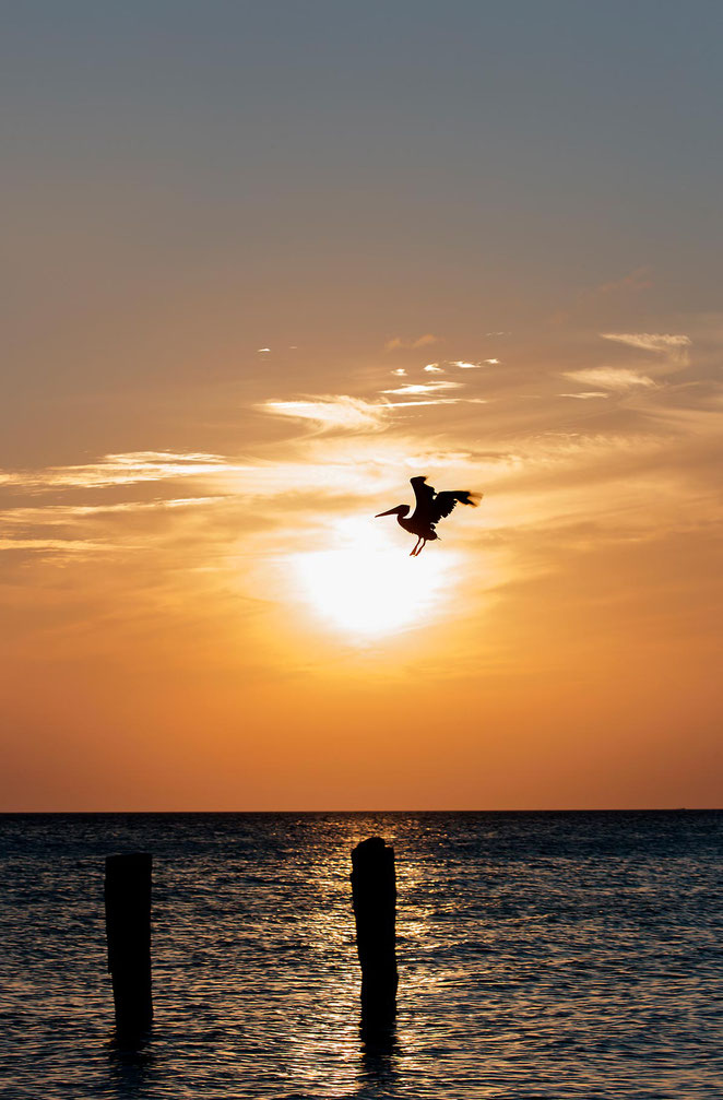 Pelican landing on a wood pole during the sunset in the Gulf of Mexico, Island Holbox, Yucatan Peninsula, Mexico, 1196x1820px