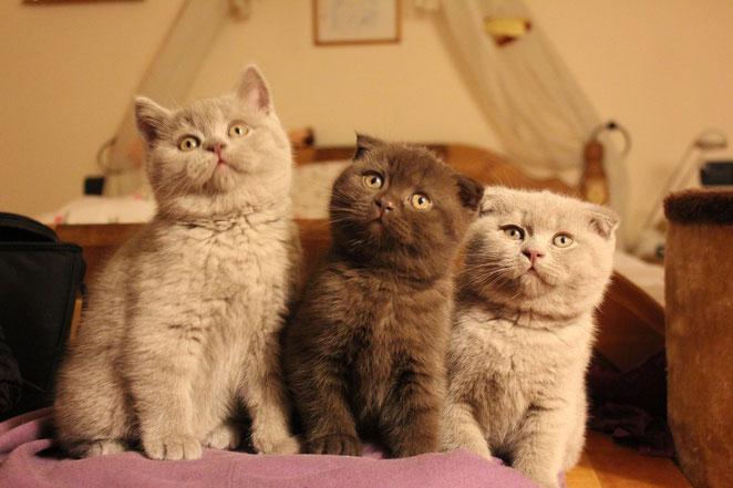 Ginevra, Noelle, Artù.