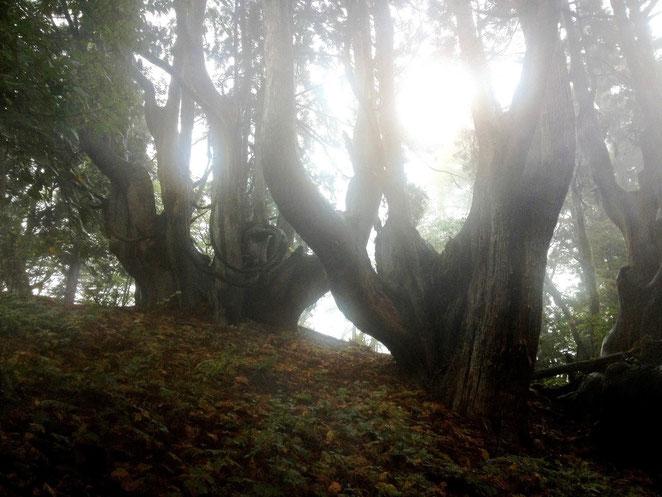 京都森林インストラクター会写真