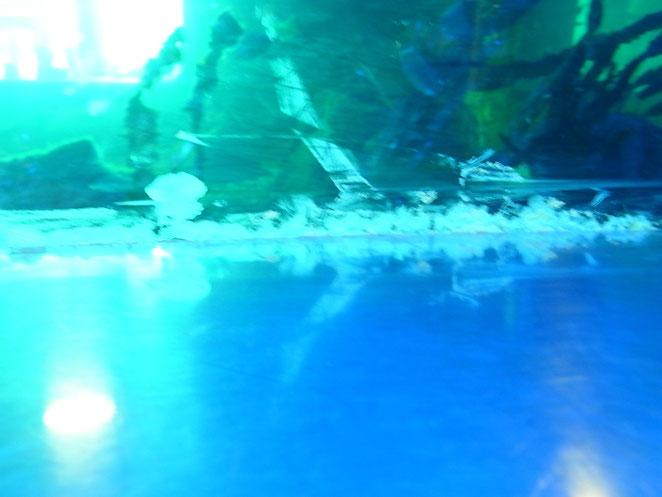 Wasser tritt zwischen Silikon und Scheibe aus!