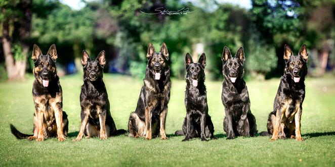 Bandit, Amelie, Barrex, Brava, Fine, Ares