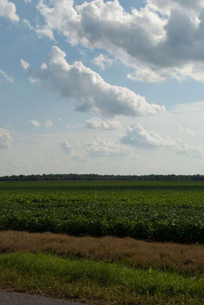 THE TREE LINE MARKS BAKER'S BAYOU, A LONG TIME HOME OF NATIVE AMERICANS