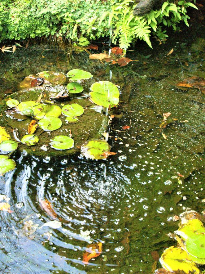 あじさい鍼灸マッサージ治療院 報国寺の池