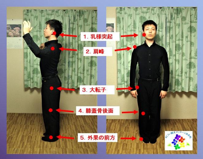あじさい鍼灸マッサージ治療院 正しい姿勢の指標