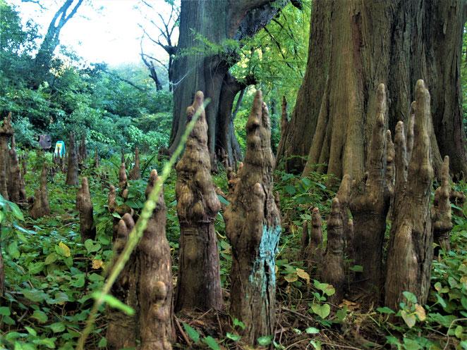 あじさい鍼灸マッサージ治療院 新宿御苑の母と子の森