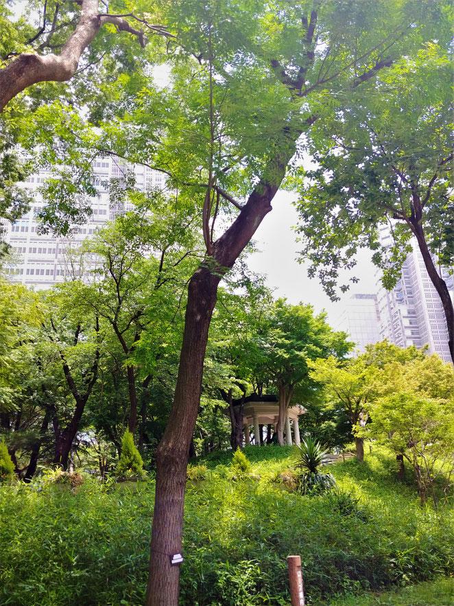 あじさい鍼灸マッサージ治療院 新宿中央公園富士見台の上の六角堂
