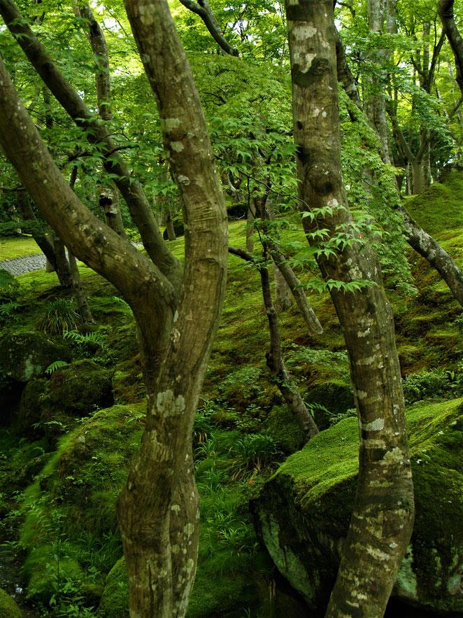 あじさい鍼灸マッサージ治療院 箱根美術館の庭園 苔による緑の景色