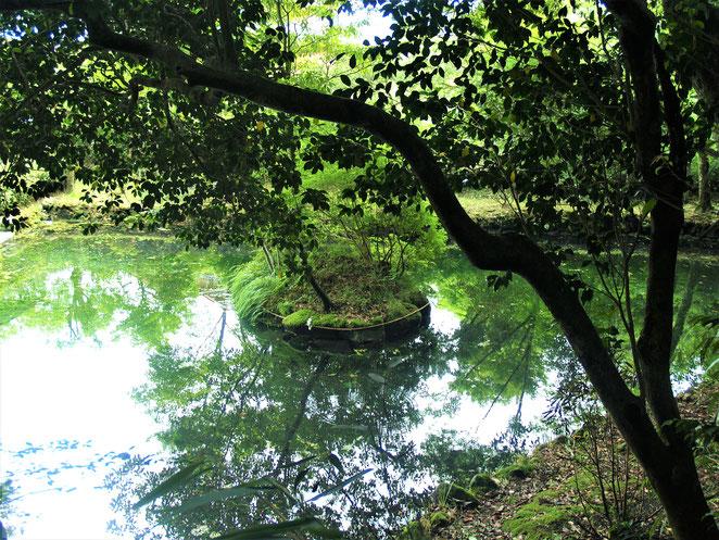 あじさい鍼灸マッサージ治療院 諏訪神社の池 浮島にしめ縄のようなものが