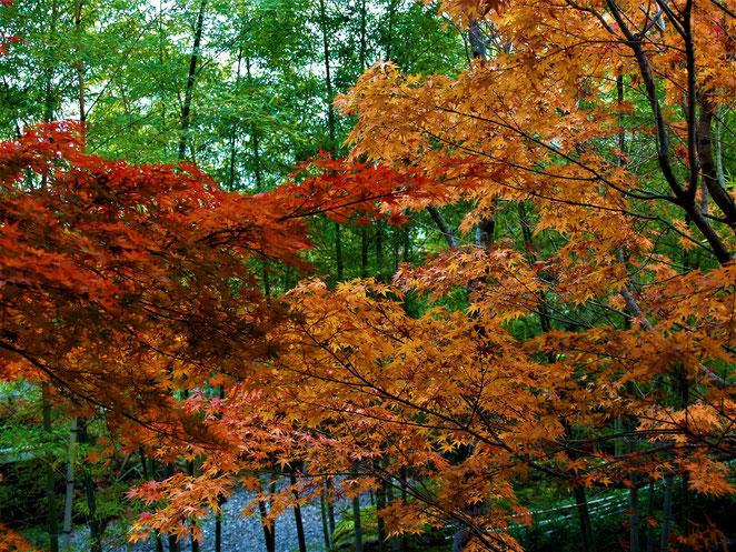 あじさい鍼灸マッサージ治療院 箱根美術館の庭園 竹と紅葉