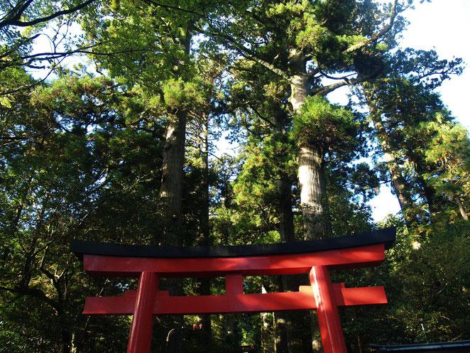 あじさい鍼灸マッサージ治療院 箱根神社の鳥居
